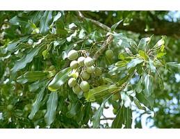Natūralus sviestmedžio aliejus, 50g